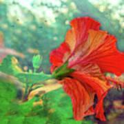 Hibiscus Flame Art Print