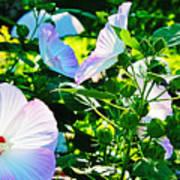 Hibiscus Garden Art Print