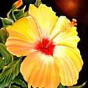Hibiscus Glory Art Print