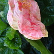 Hibiscus Heaven Art Print