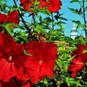 Hibiscus In Naptown Art Print
