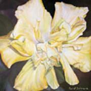 Hibiscus Jaune Art Print