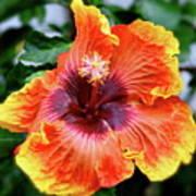 Hibiscus Art Print