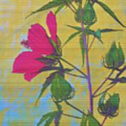 Hibiscus On Brick Art Print