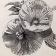 Hibiscus Sketch Art Print