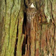 Hidden On The Tree Art Print