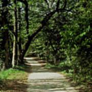 Hidden Path Art Print