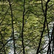Hidden Pond Natural Fence Art Print
