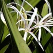Hidden Swamp Lily Art Print