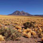 High Altitude Puna Grasslands And Miniques Volcano Chile Art Print