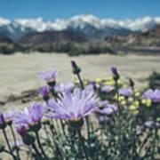High Desert Wildflowers Art Print