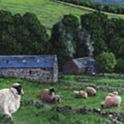 Highland Croft Art Print