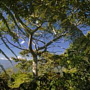 highlands in Costa Rica 2 Art Print