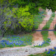 Hill Country Road Art Print