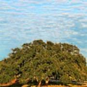 Hill Country Tree  Art Print