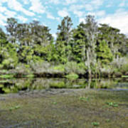 Hillsborough River 1 Art Print