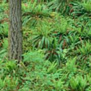Hillside Ferns Art Print
