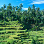 Hillside In Indonesia Art Print