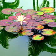 Hilo Water Lily 5 Art Print