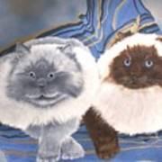 Himalayan Cats  Art Print