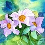 Himalayan Poppies Art Print