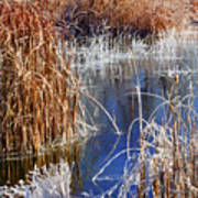 Hoar Frost On Reeds Art Print