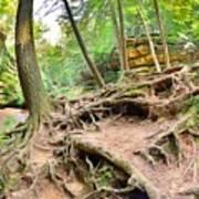 Hocking Hills Ohio Old Man's Gorge Trail Art Print