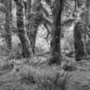 Hoh Rain Forest 3371 Art Print