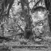 Hoh Rain Forest 3381 Art Print