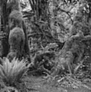 Hoh Rain Forest 3389 Art Print