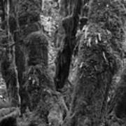 Hoh Rain Forest 3406 Art Print