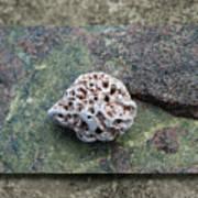 Holey Stone 2 Art Print