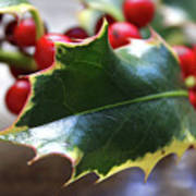 Holly Berries- Photograph By Linda Woods Art Print