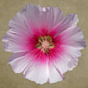 Hollyhock On Linen 2 Art Print