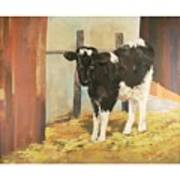 Holstein Calf Art Print