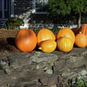 Homegrown Pumpkins Art Print