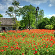 Homestead In The Poppies Art Print