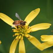 Honey Bee Mine Art Print