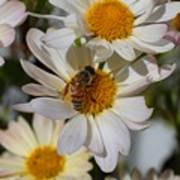 Honeybee And Daisy Mums Art Print