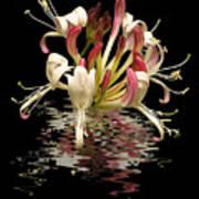 Honeysuckle Reflections Vertical Art Print