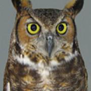 Hoot-owl - I'm Looking At You Art Print