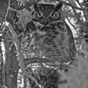 Hootie Owl  Art Print