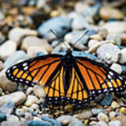 Hope Of The Monarch Butterfly Art Print