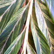 Horizon Of Palm Art Print
