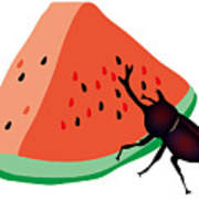 Horn Beetle Is Eating A Piece Of Red Watermelon Art Print