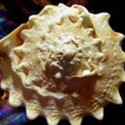 Horned Helmet Shell Top Logarithmic Spiral Art Print