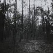 Horror In The Woods Art Print