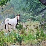 Horse 017 Art Print