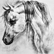 Arabian Horse 1 By Diana Van Art Print