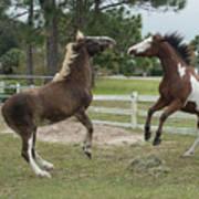 Horse Aerobics Art Print